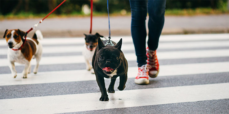 Dog walking business guide